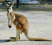 move_australia